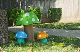 tribal woodland photo area mushrooms